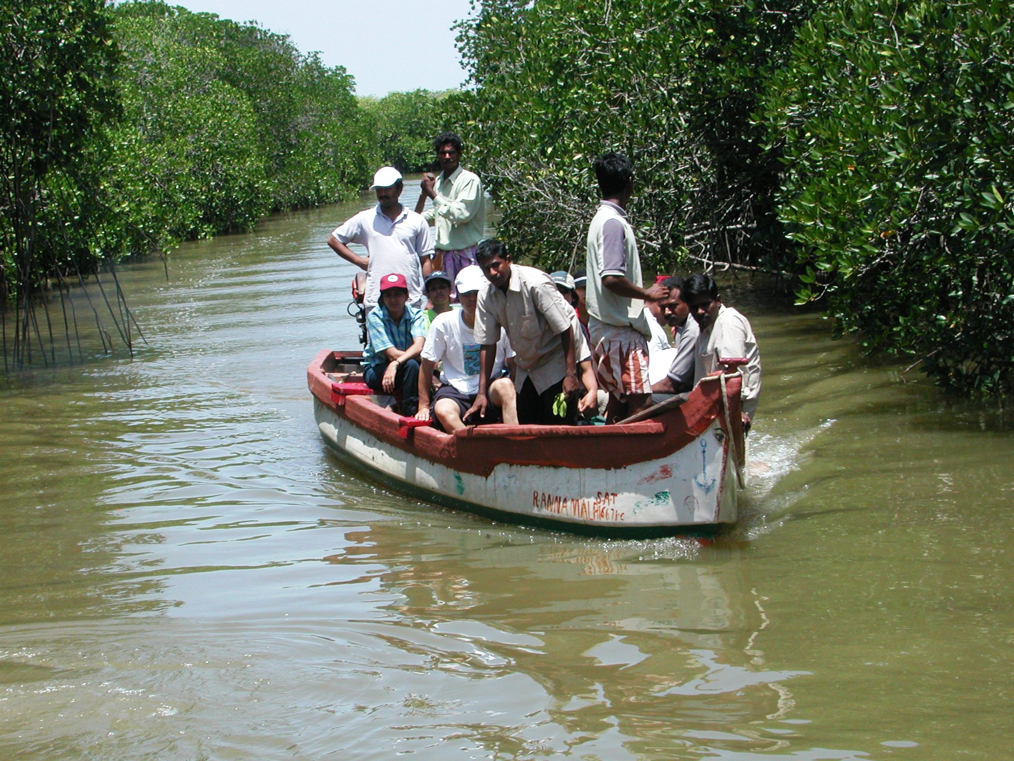 Boat ride in the mangrove waters